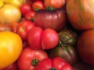 tomatoes14081516