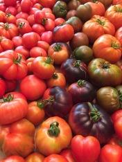 tomatoes7081516